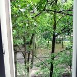 Кошачий ужас - открытое окно и ветки в нем.